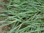 Moist Grass