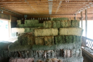 stacking alfalfa
