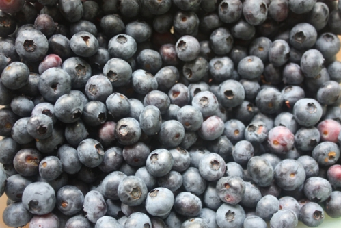 lots o' blueberries