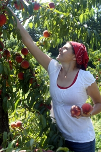 grace picking peaches