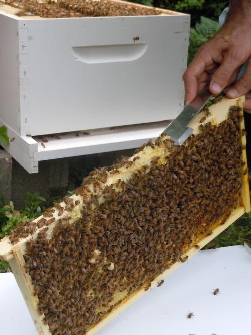 hive check